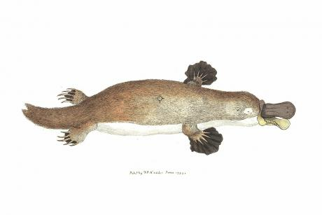 Platypus clean